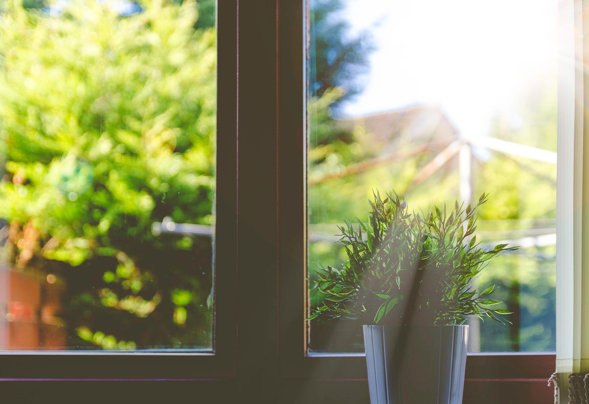 植物のある窓